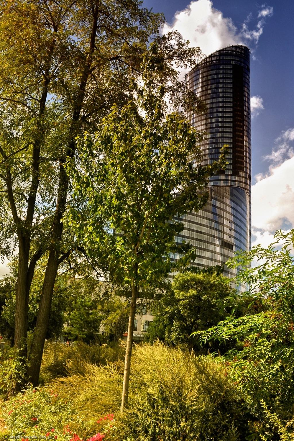 Sky Tower zza drzew na kilka sposobów