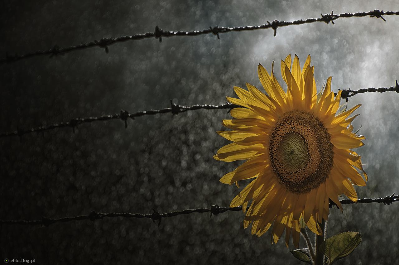 Marzenia o wolności...