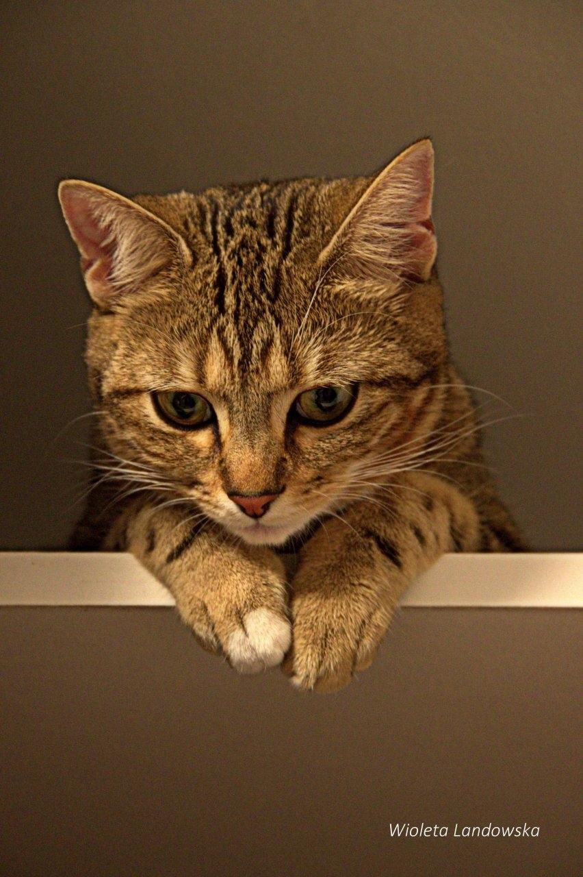 Moje dobranoc:)Moje milosci kocie:)