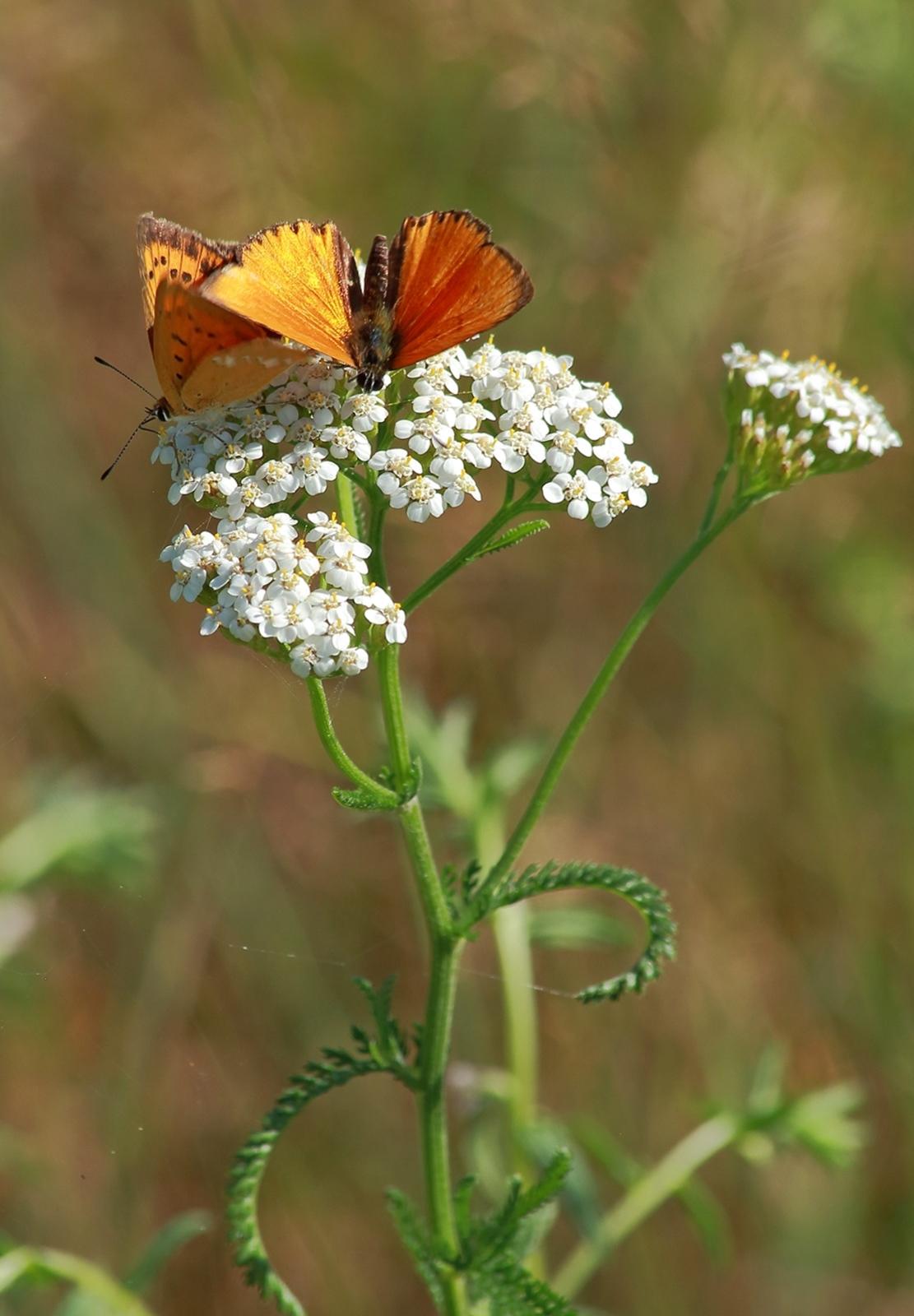 Świat motyli- parka Modraszków:)