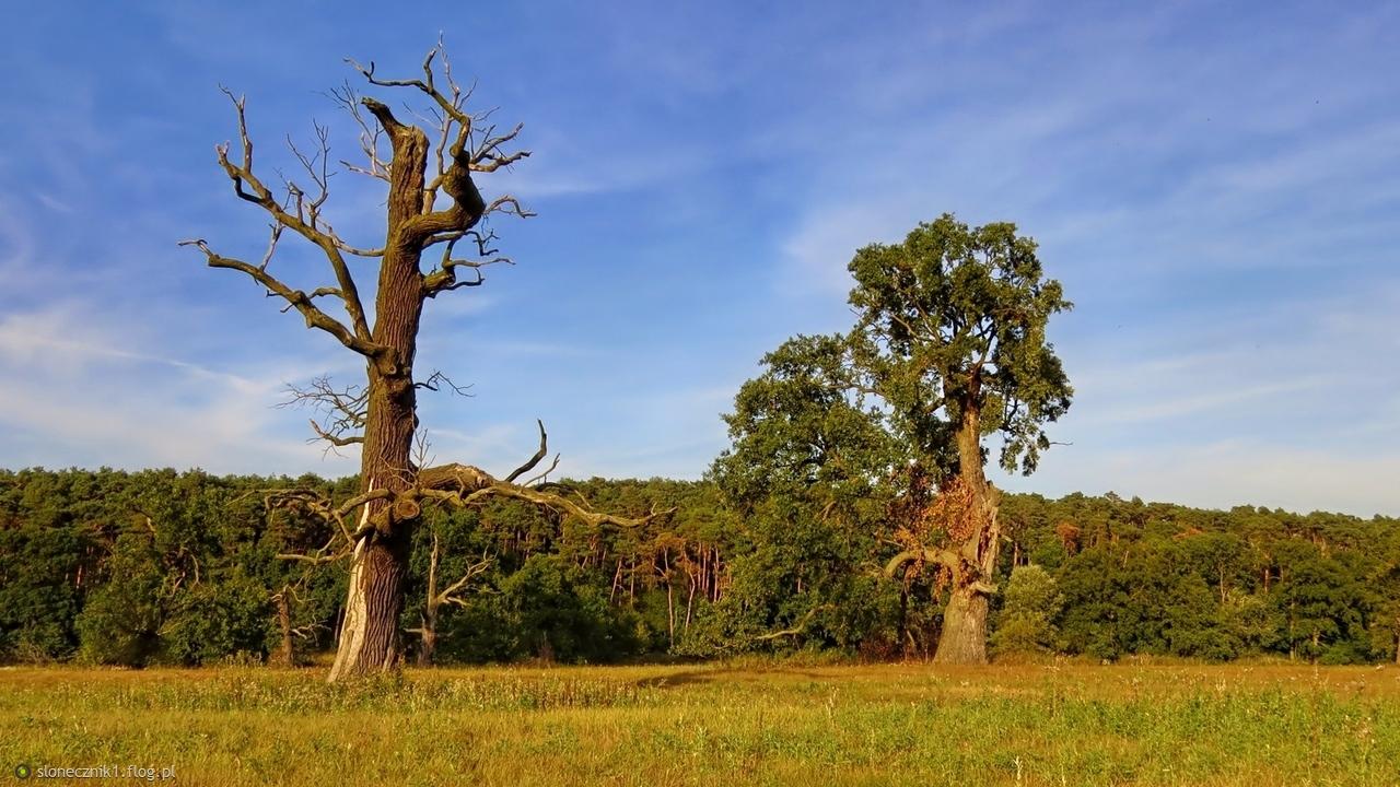 W niezwykłym świecie rogalińskich drzew ... jedno z moich ukochanych miejsc dla Ciebie
