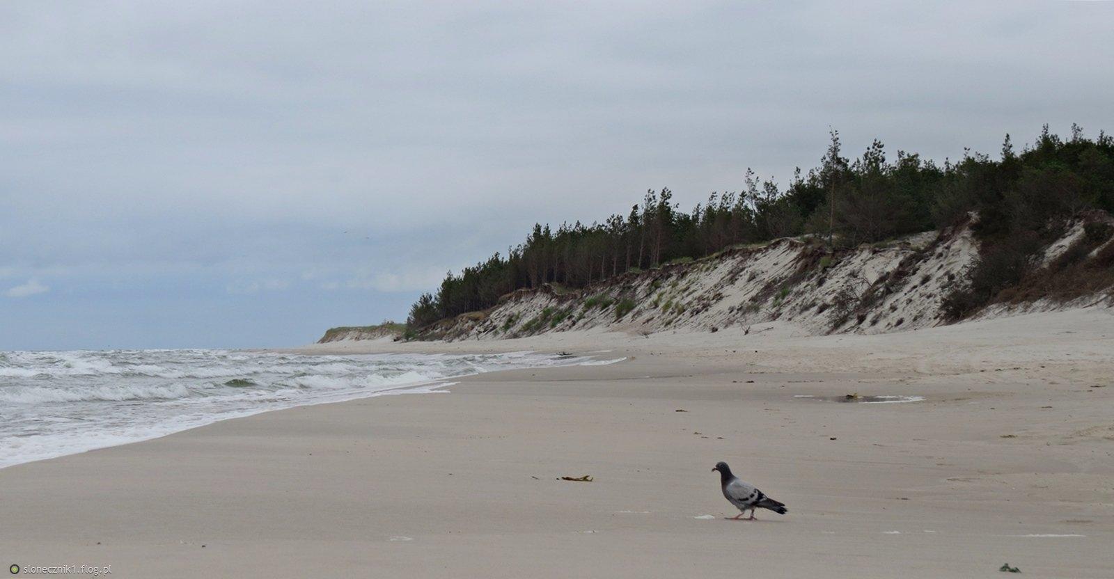 Pusta plaża , więc na spacer wyszedł :)