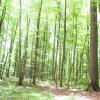:: Cisza a jednak sluchac ja<br />k odycha tu zycie-jak szu<br />mia drzewa, jak spiewaja <br />ptaki,jak sie zmienia o k