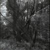 Podwójna ekspozycja lasu