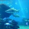 Podwodny świat:)