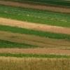 Małopolskie letnie pola