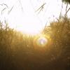 najpiękniejsze są zachody słońca uchwycone w trawie  ::