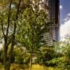 Sky Tower zza drzew na ki<br />lka sposobów ::