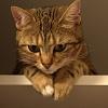 Moje dobranoc:)Moje milos<br />ci kocie:) :: obserwatorka....😻