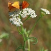 Świat motyli- parka Modra<br />szków:) ::