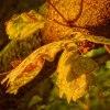 nadchodzi jesień ::