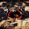 Każdy motyl lata własnym <br />niebem.