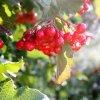 :: Po wspomnieniu lata, prze<br />chodzę do teraźniejszości<br />. Wczesna, barwna i słone<br />czna jesień.  Jestem