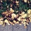11. Atrybuty jesieni