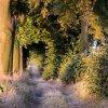 Drzwi do lasu? :: Zabytkowa aleja inaczej -<br /> nawet nie w lesie, ale m<br />iędzy polami .... także w<br /> wersji b&amp;w :)